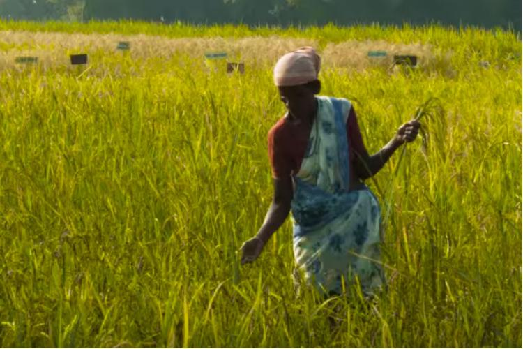 How farmers in a taluk in Tamil Nadu are bringing back organic farming